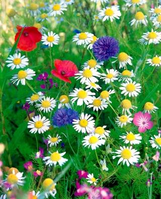 Anti-smog Flowery Meadow - smog-reducing flowering plants' selection - 250 grams