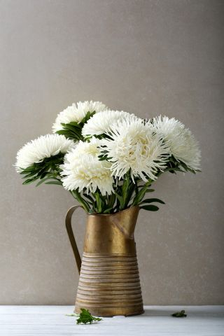 White needle petal china aster, Annual aster - 500 seeds