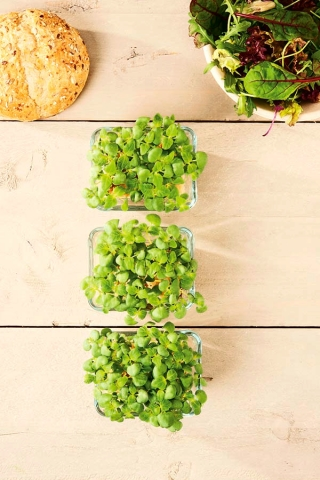 """Microgreens - Lemon basil """"Mrs Burns"""" - young leaves with exceptional taste - 1950 seeds"""