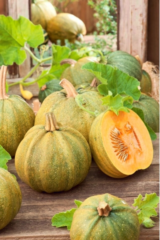 Squash 'Danka Polka' - for seeds - 100 grams; pumpkin