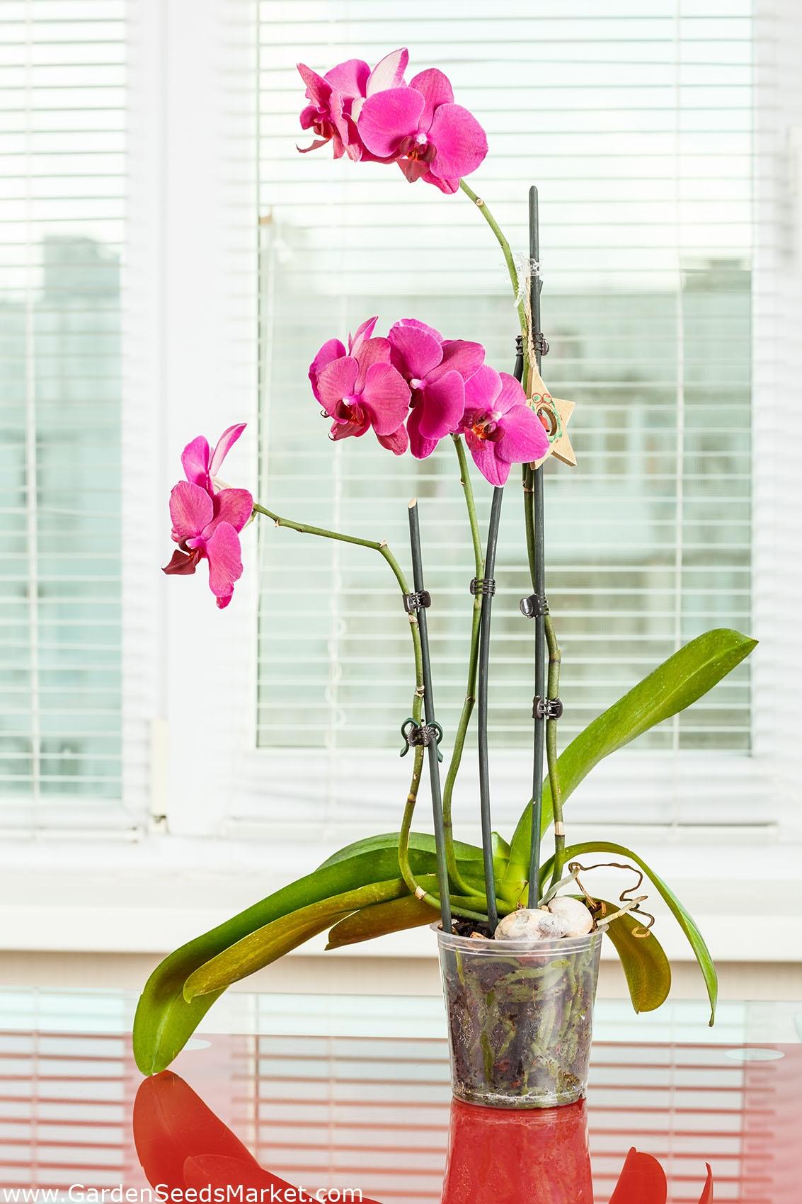 Clear Orchid Pot 21 cm