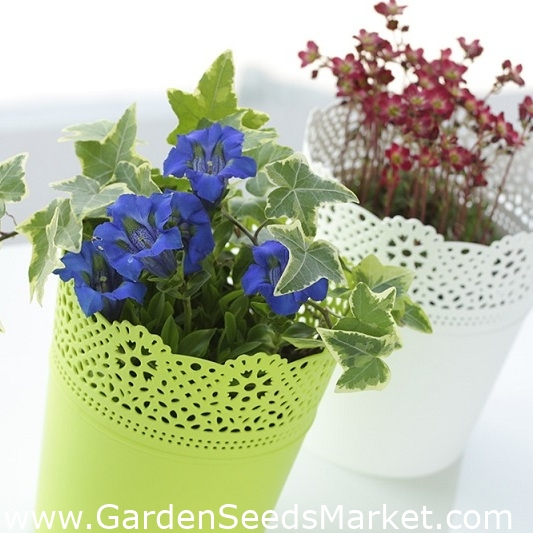 Runder Blumentopf Mit Spitze 13 5 Cm Spitze Limette Garden Seeds Market Kostenloser Versand