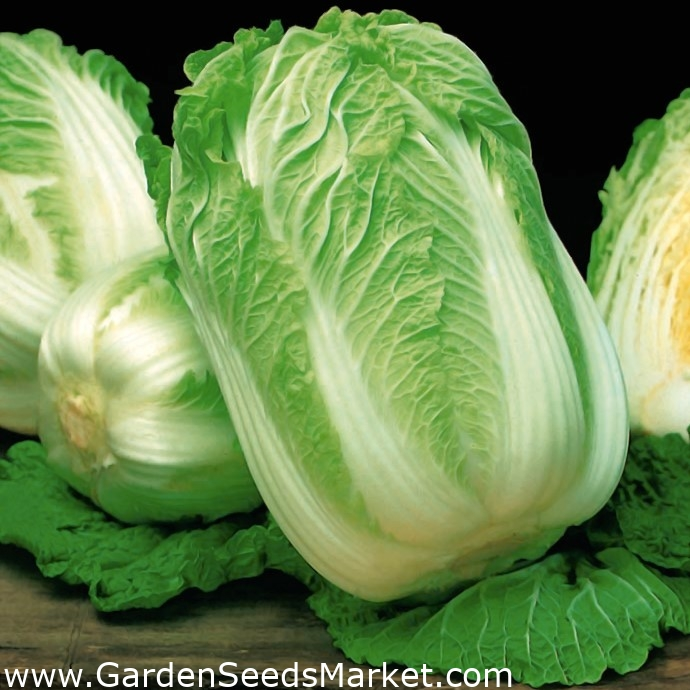 Napa Cabbage Optiko Chinese Cabbage Early Delicious Variety 65 Seeds Garden Seeds Market Free Shipping
