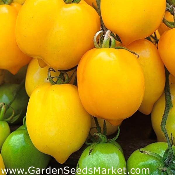 простой суп-пюре томат цитрина отзывы фото освоение