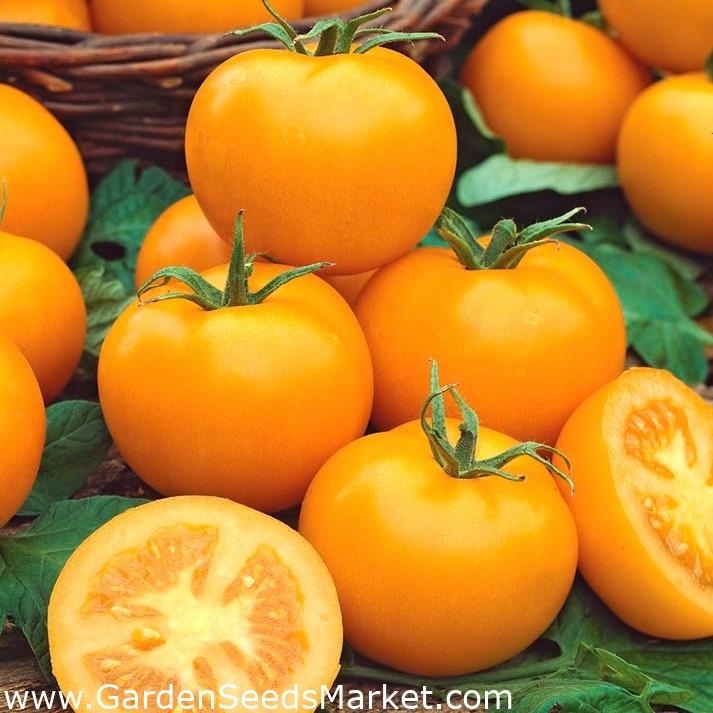 томаты ромус отзывы и фото старое