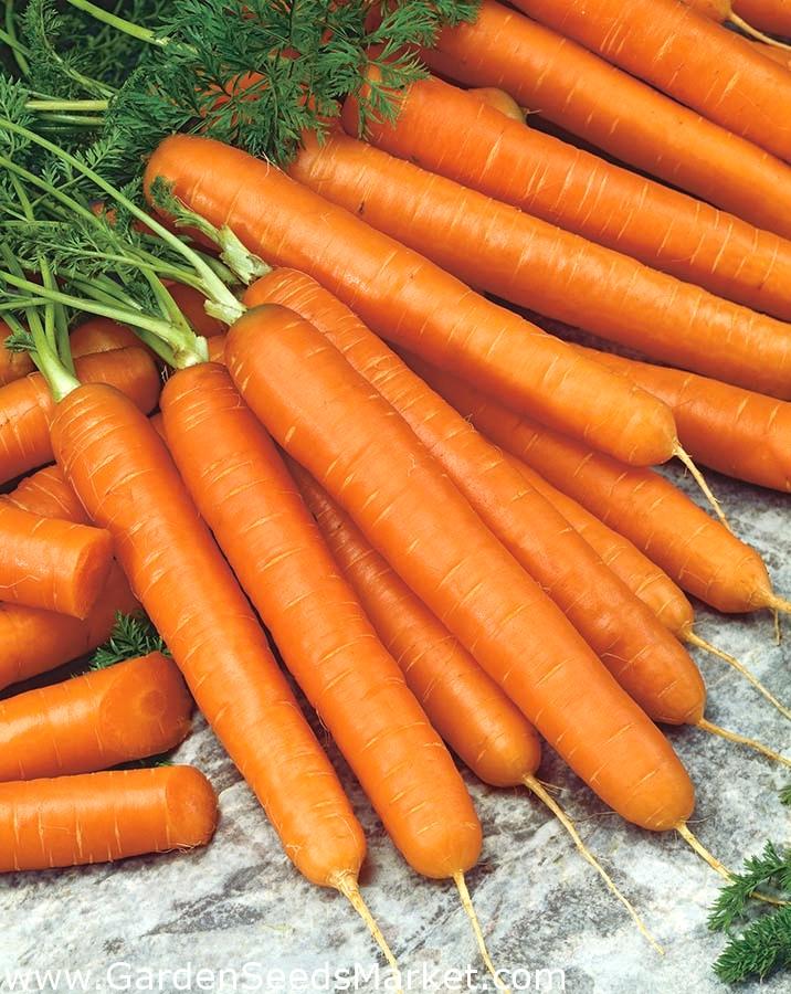 1000 graines Légumes-Carotte-Autumn King
