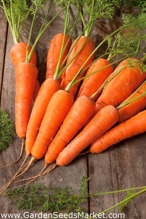 sárgarépa látás vitaminok a látás javítására felnőtteknél