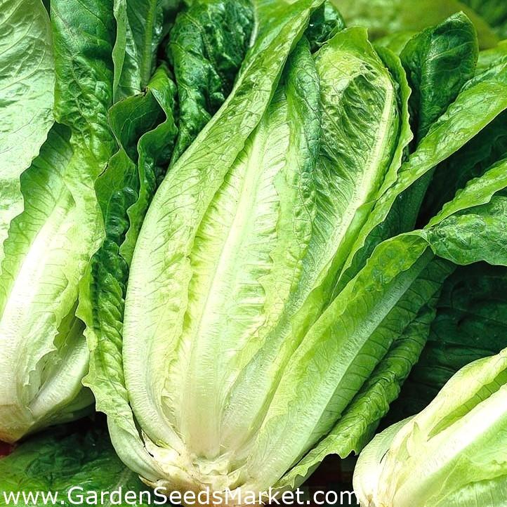 este salată romaină bună pentru pierderea în greutate